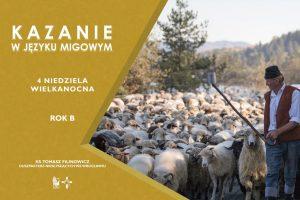 Plansza z owcami i pasterzem oraz z napisem Kazanie w języku migowym na 4 niedzielę wielkanocną